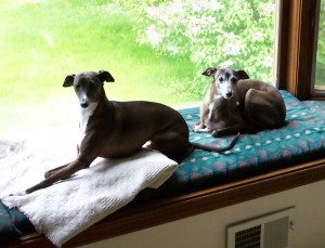 The boys enjoyed the window seat over looking the backyard in Pittsford